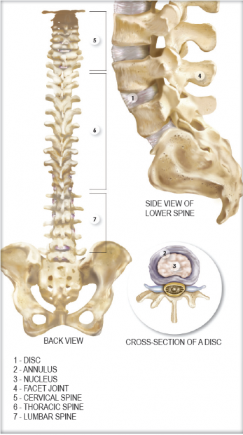 Anatomy And Function Of The Spine Sporting Life Arkansas