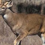 Arkansas Deer Season Dates Set for 2013-14