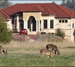 arkansas urban archery deer hunting