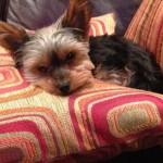 Bret Bielema's dog Lucy