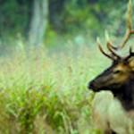 Jonesboro Doctor Scores First Elk of Arkansas Season – With a Bow
