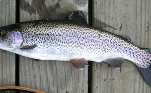 Arkansas Fishing Report