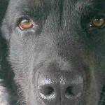 Man's Best Friend Oscar Trains for Dock Dog Events