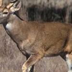 Arkansas Deer Hunters Top 200,000 in Harvest