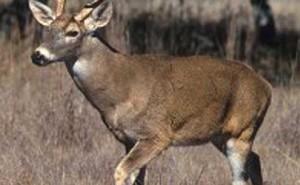 Arkansas Deer Seasons
